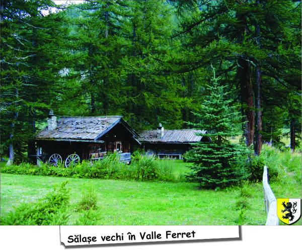 valle_Ferret2