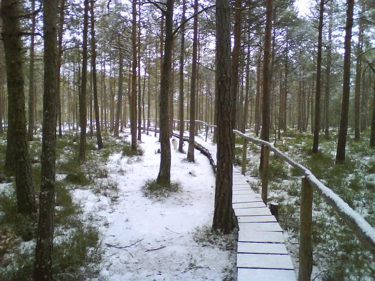 2_Turbaria_Mohos_iarna