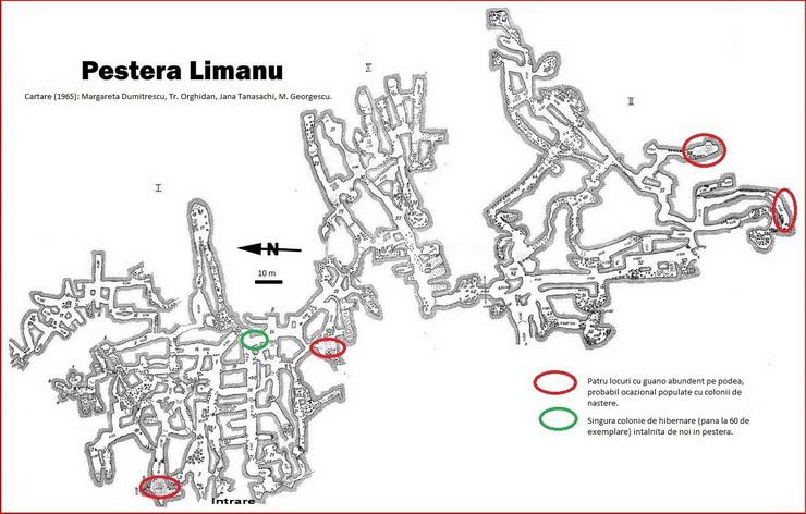 Pestera Limanu