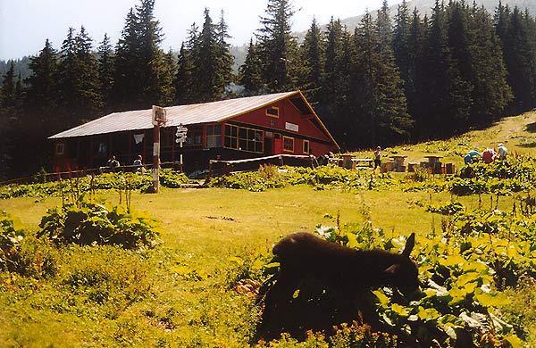 Cabana şi poiana Bârcaciu