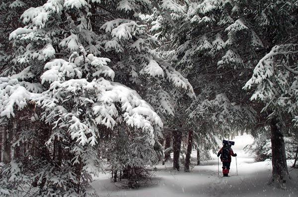 A Man Who Walks Alone ( variantă de iarnă )