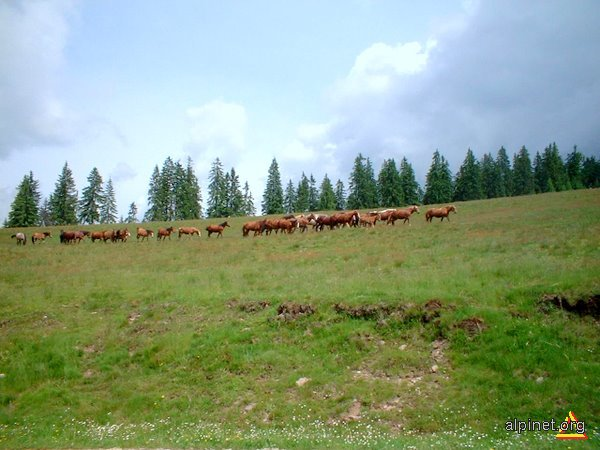 Caii de la Padiş