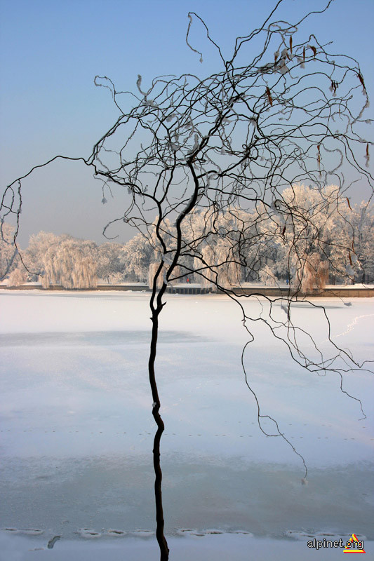 Copacul frânt