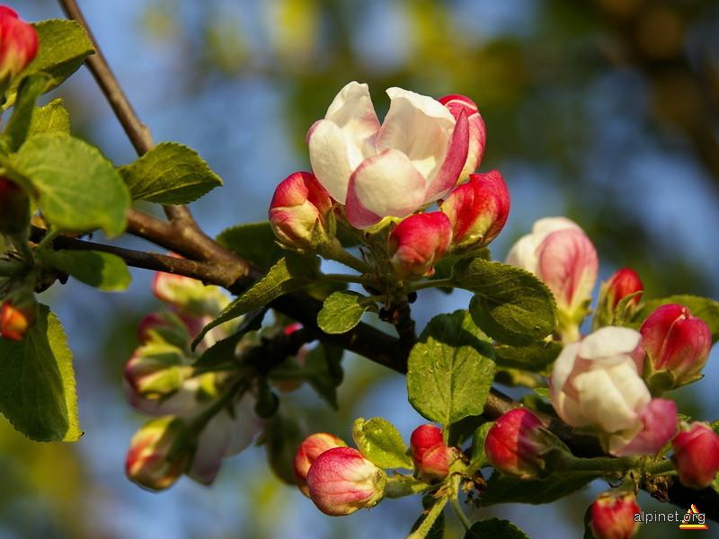 Flori de m�r