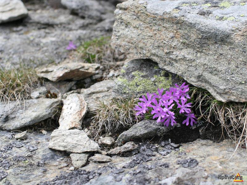 Floricele 2