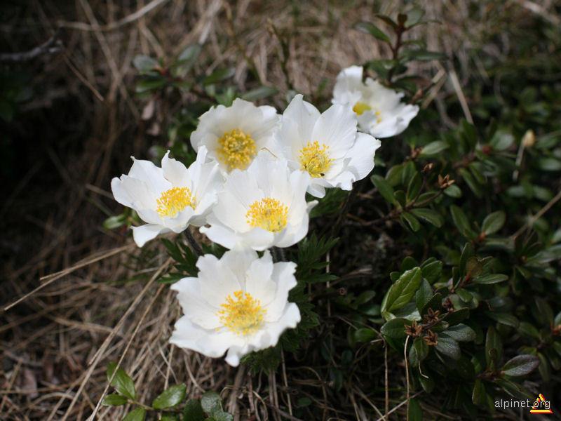 Floricele 3