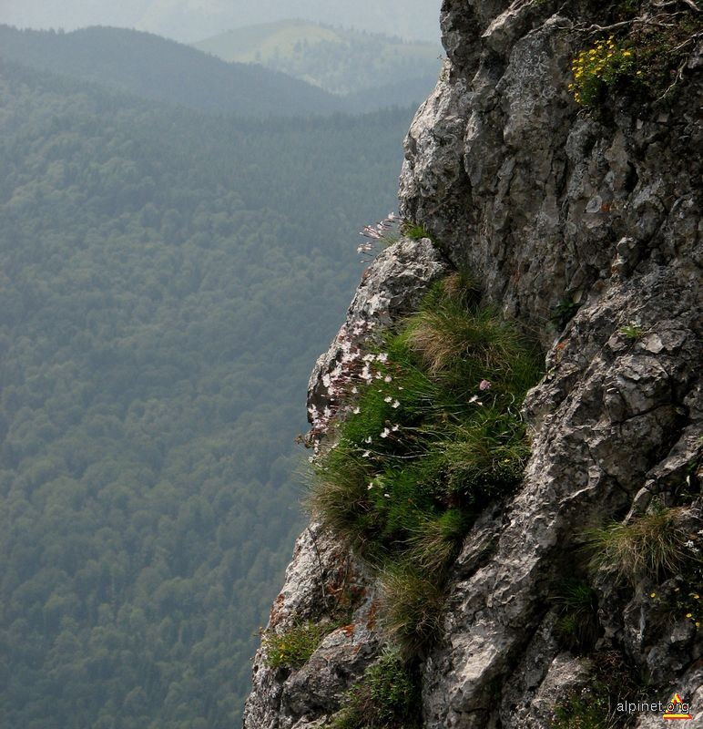 http://alpinet.org/foto/2010/07/23/NDZiMmE5ZGIxNDhjNjBkZWQ2MjAzYTQwZDZmODBjZjfoto_100204.jpg