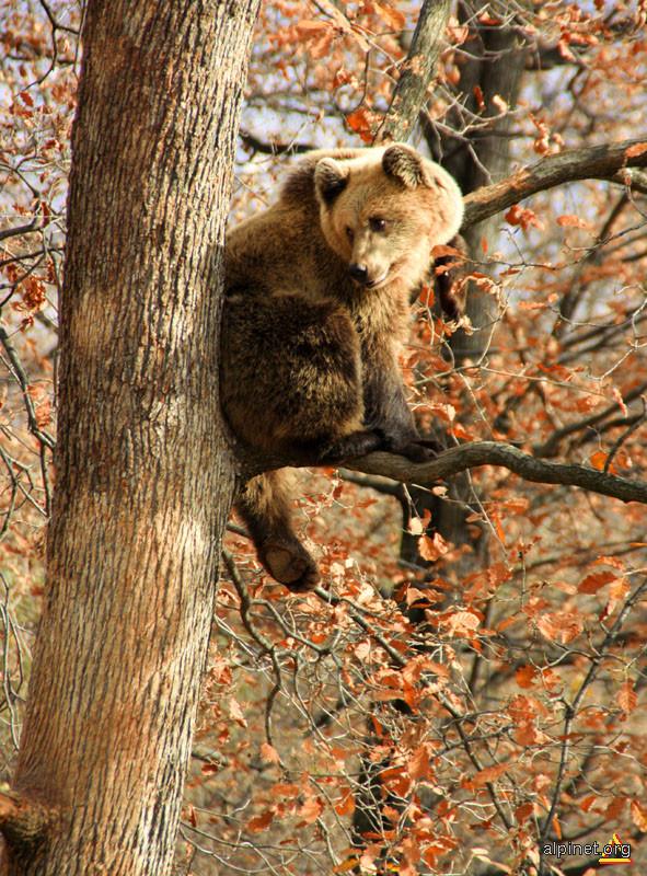 tree climber...:)