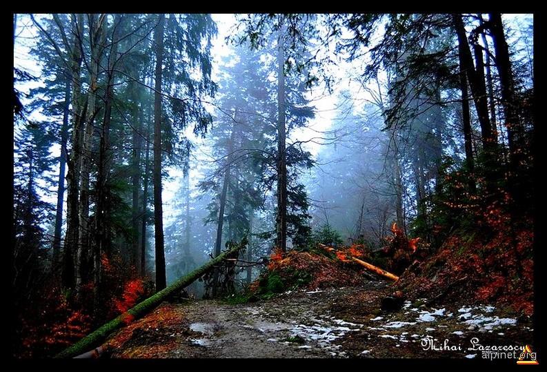 Prin pădurea ielelor
