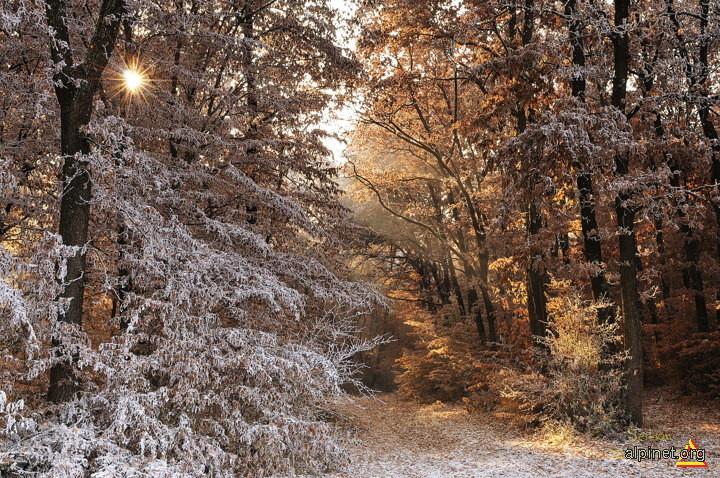 Pădurea din basme