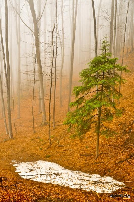 Pădurea misterioasă