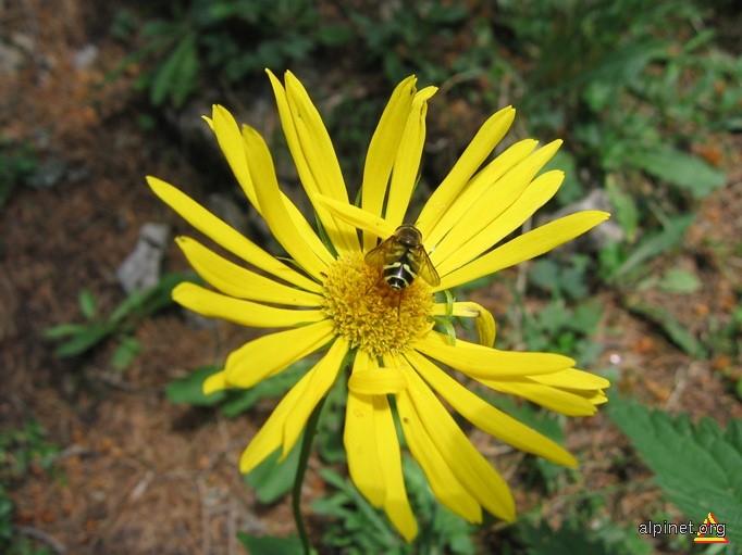 Floră 3