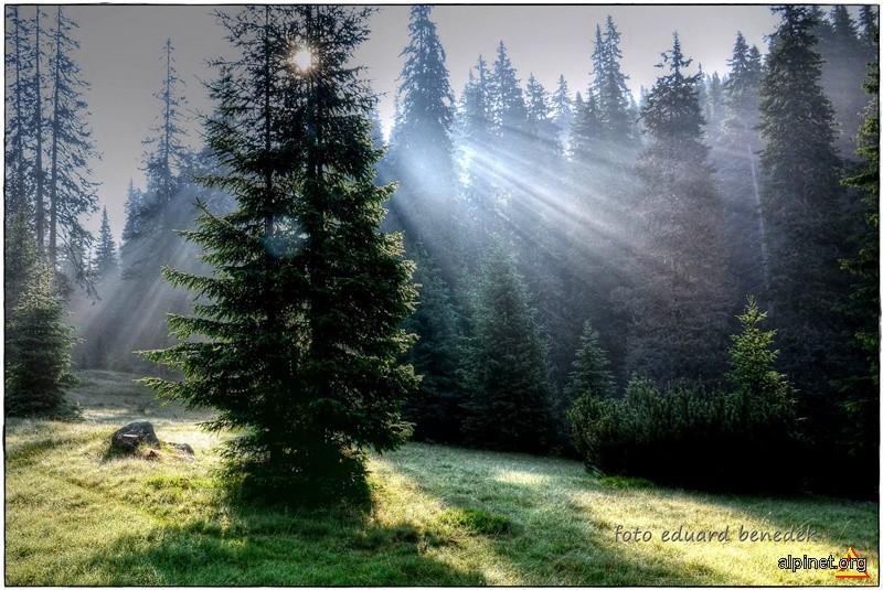 Magia diminetii, in Poiana Pelegii