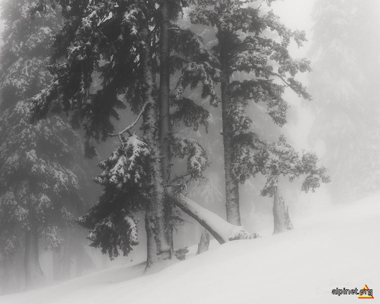 Poveşti de iarnă