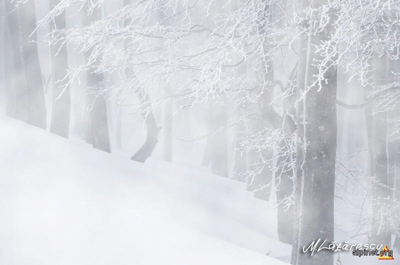 Prin ceata
