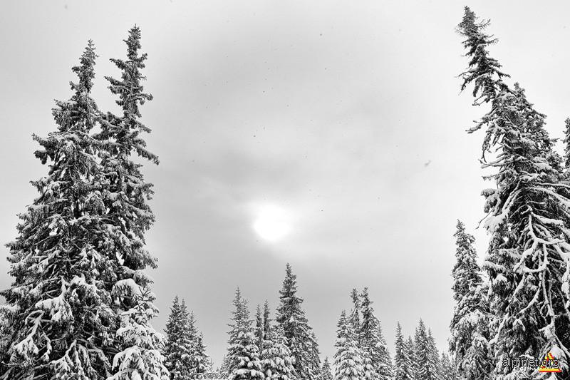 Ninge iar...