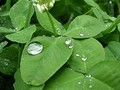 Dupa ploaie