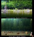 Suntem contemporani cu Lacul Cuiejdel..!