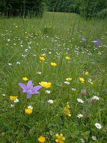 floricele să culegem.. :)
