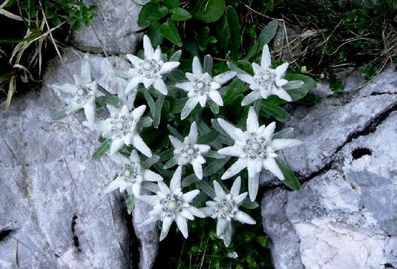 Catagoria ..... 10 stele