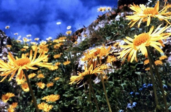 Ţinutul florilor
