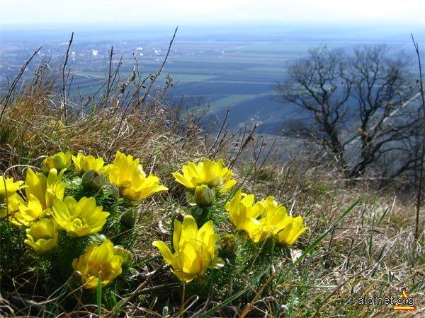 Bulgăre de primăvară