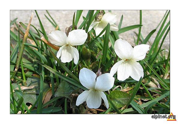 de început de primăvară