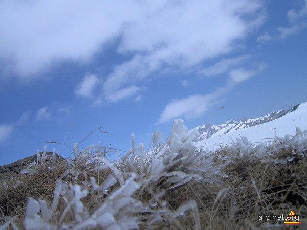 Flori de gheaţă