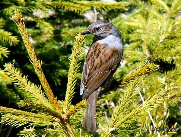 O pasăre-ntr-un pom cânta...