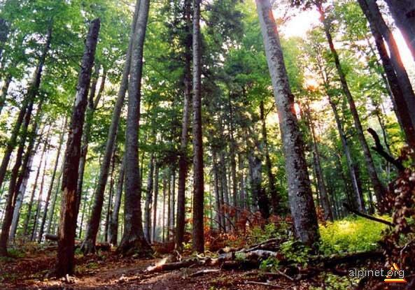 Pădurea Fermecată