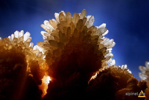 Floare de Piatra-1
