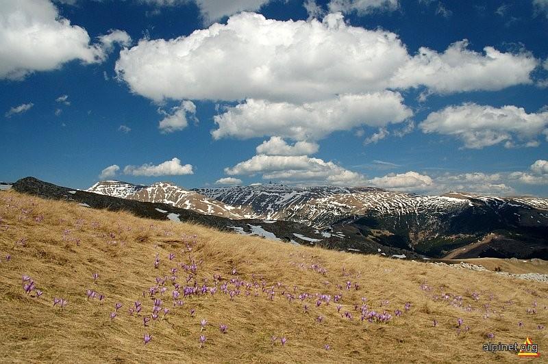 Primăvara alpină (II)