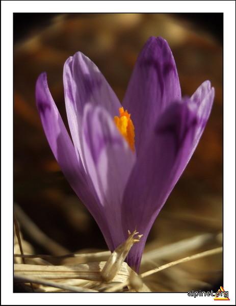 Culoare în primăvară
