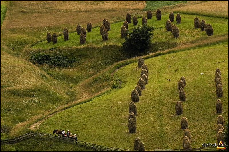 nu călcaţi pe iarbă