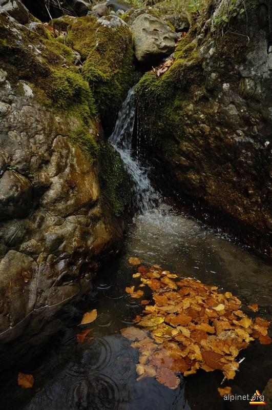 Izvor cu frunze şi picături de ploaie