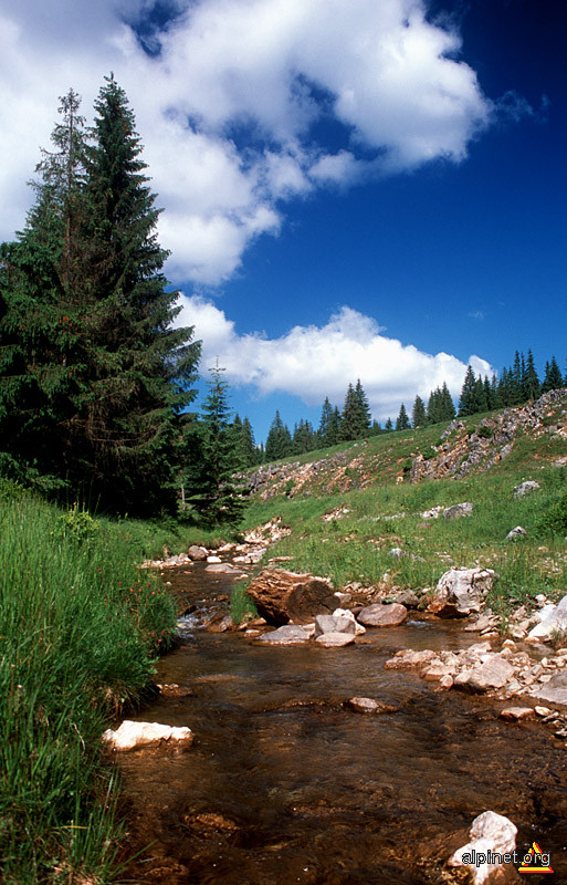 Valea Firii