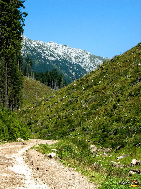 Cândva era un drum prin pădure