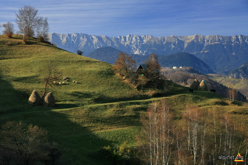 Craiul munţilor
