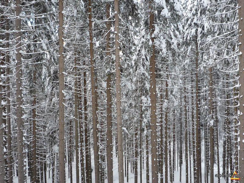 e iarna in padure
