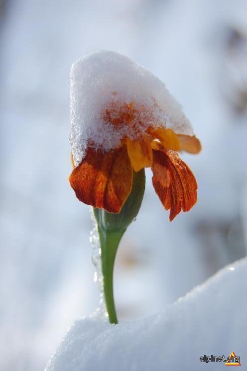 Iarna grea