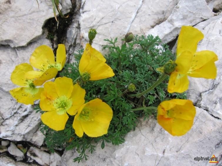 Flora specifica zonei calcaroase