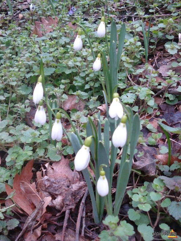 Primăvară în februarie!