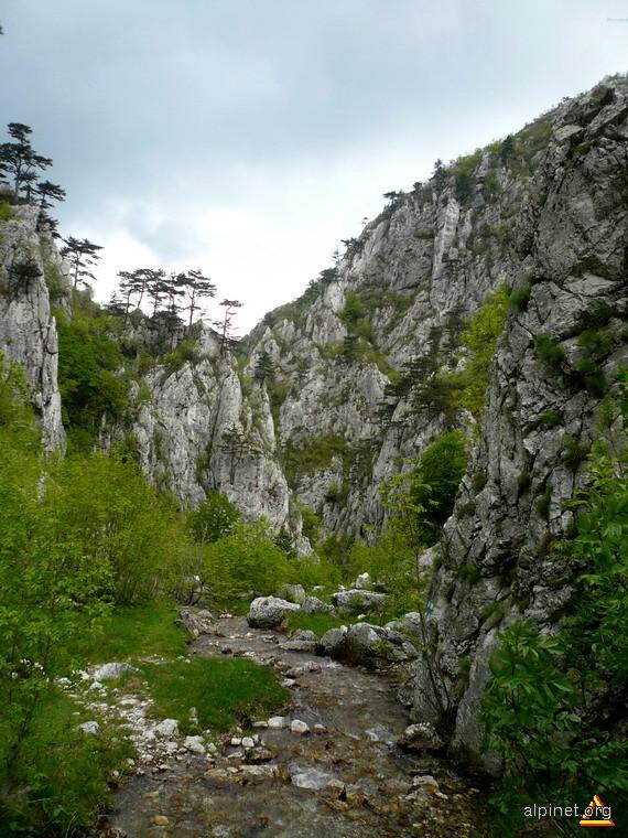 Paraiasul care a sculptat Cheile Tasnei, aceasta minune a naturii.