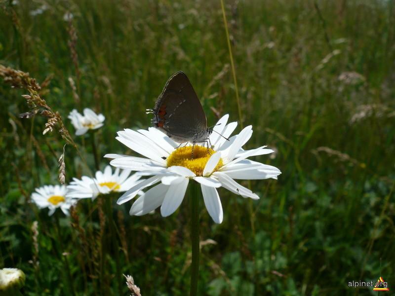 Un fluture pe-o floare!:-)