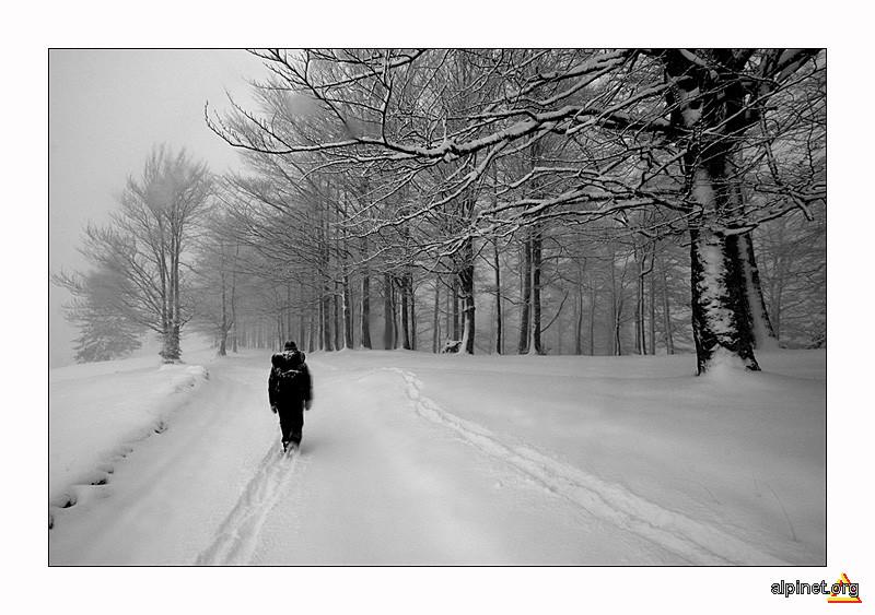 plimbare prin alb