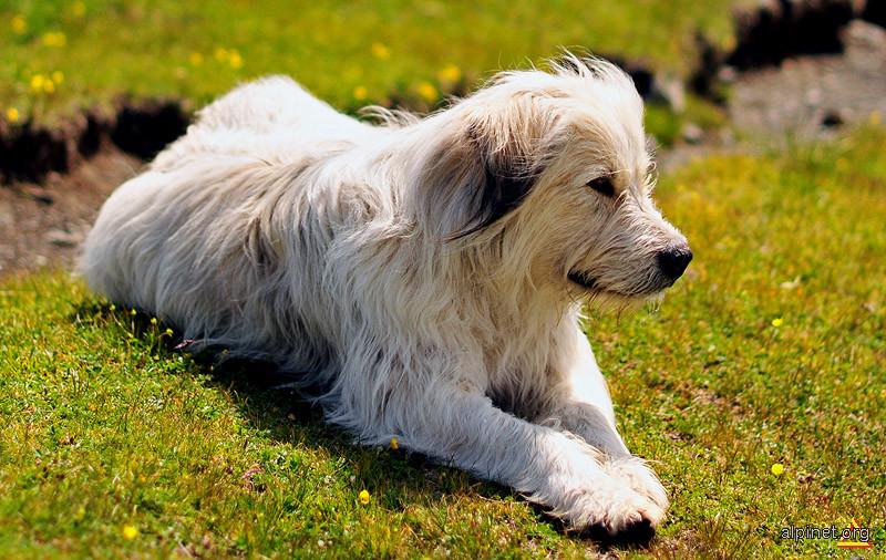 Câini-s un fel de...oameni mai devotaţi