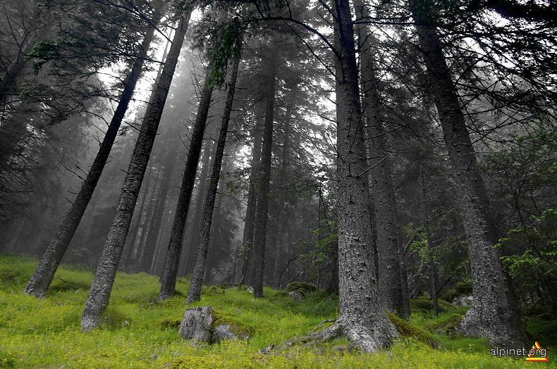 Spune-mi, pădure nebună, misterul clarului de lună