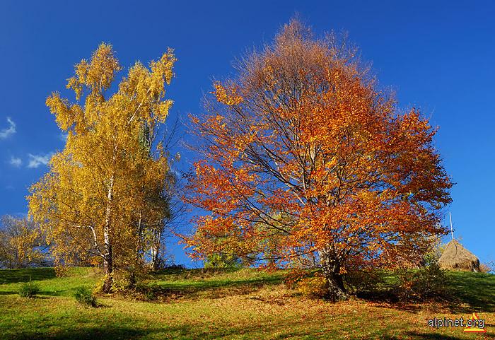 Pădurea cu frunză rară...