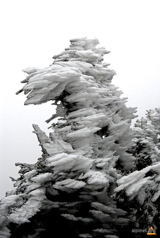 Cojoc de zăpadă