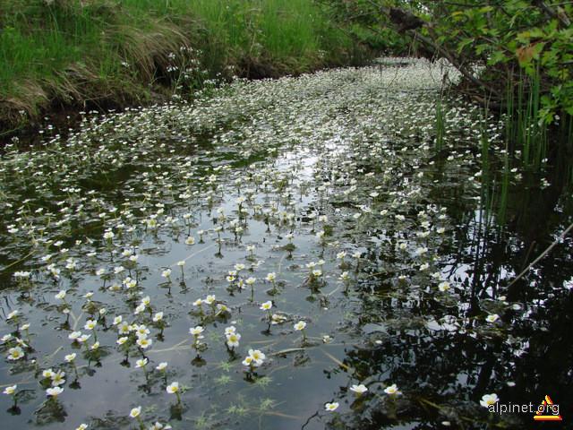 Şi apele înfloresc în mai...